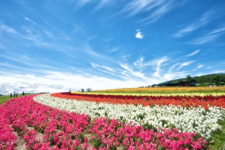 色とりどりの花畑