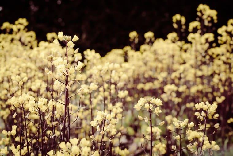 幻想的な花畑