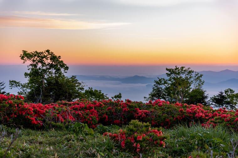 美しい山ツツジ