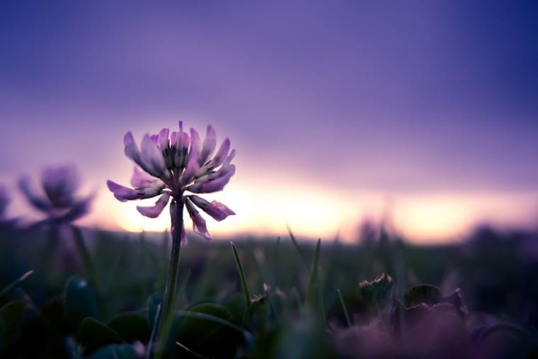 一輪の美しい花