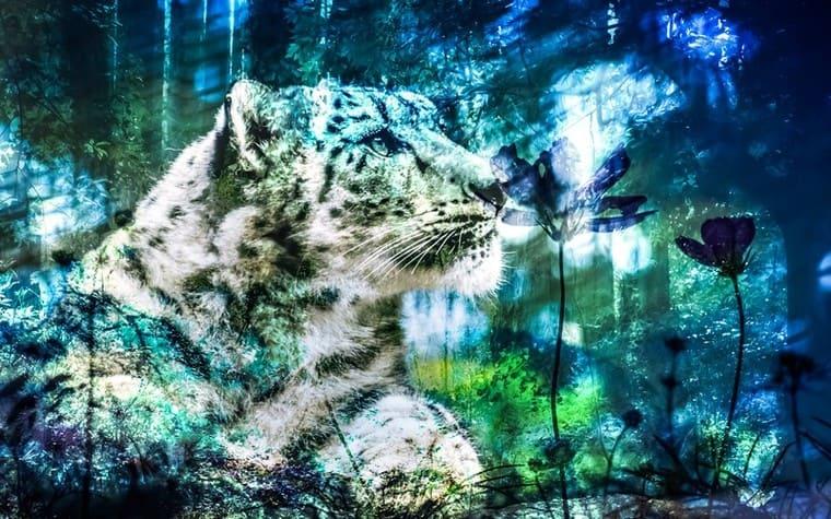虎と森のフォトモンタージュ