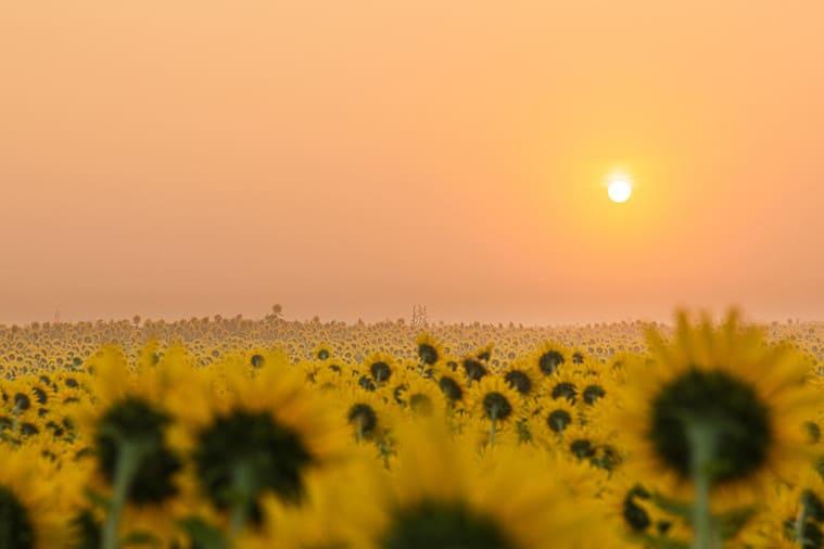 美しい朝日とひまわり