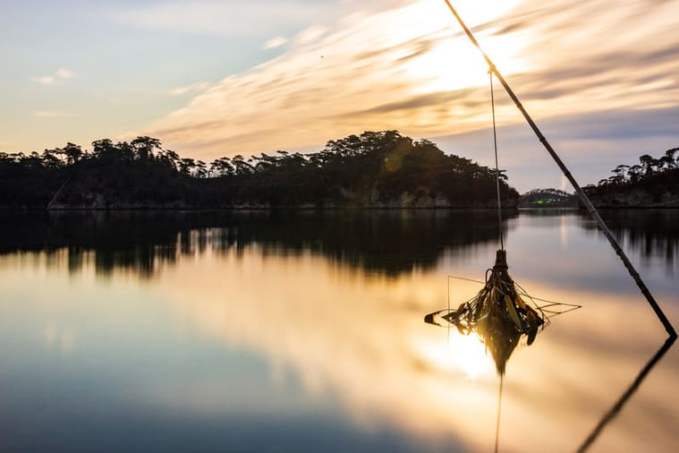 穏やかな海と竹竿