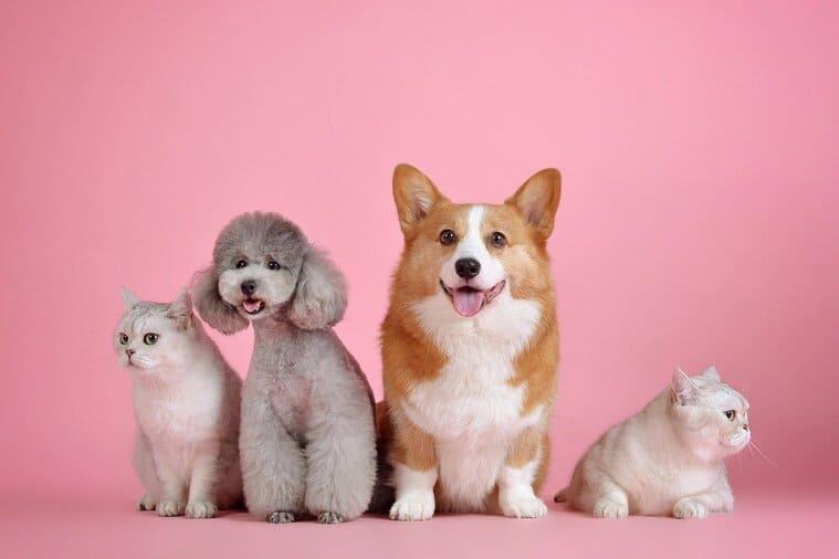 4匹の犬と猫
