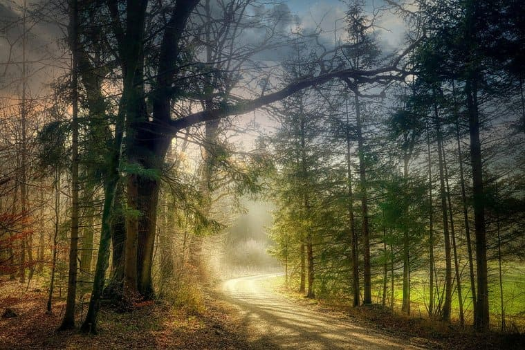 美しい森の風景