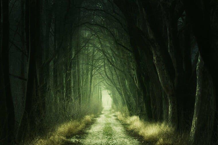 秘密が眠る雰囲気の森