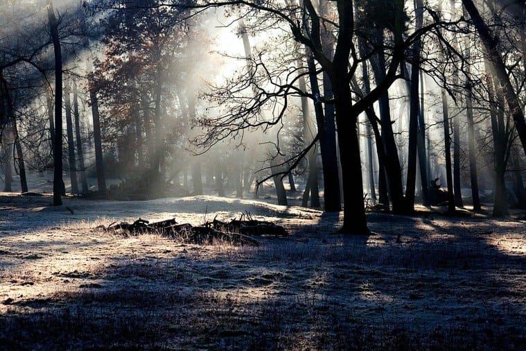 森に射す木漏れ日