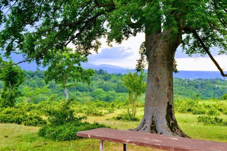 ジョージア州の景色